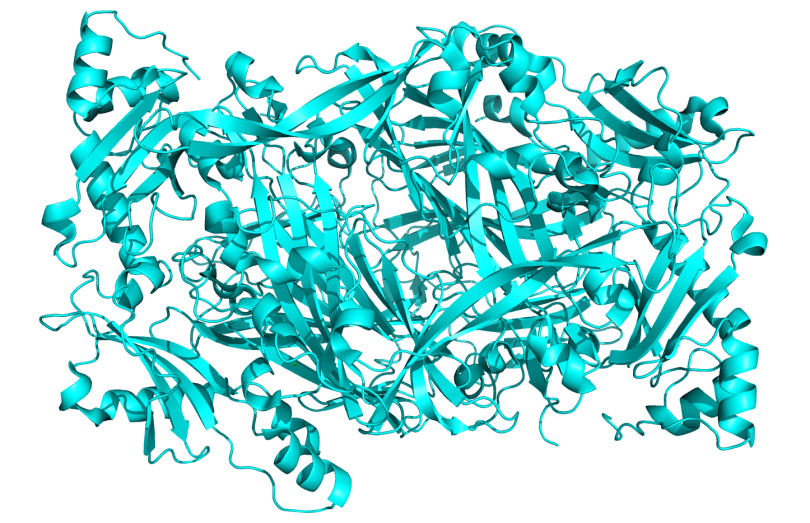 Crystal_Structure_of_Human_Diamine_Oxidase