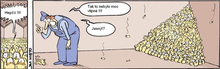 ptaci_chripka