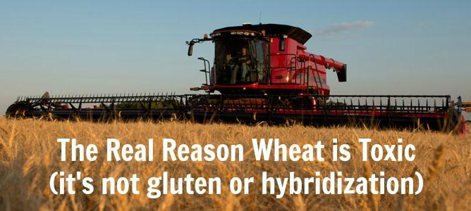 toxic-wheat1